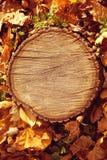 Träbakgrund för höstskogbrunt Texturskogträstu Royaltyfri Bild
