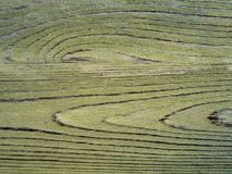 TräBakgrund-gräsplan Royaltyfria Foton