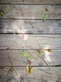 Träbakgrund med det gröna bladet Arkivfoton