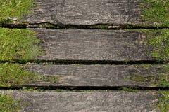 Träbakgrund med mossa Royaltyfria Bilder