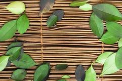 Träbakgrund och leafs Royaltyfri Bild