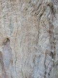 Träbakgrund och textur Arkivbild