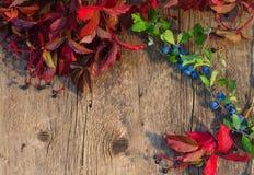 Träbakgrund som inramas av röda sidor och grön filial w för höst fotografering för bildbyråer