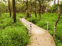 Träbana som omges med gräs i skogen Royaltyfri Foto