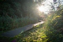 Träbana till och med en skog med den Lens signalljuset arkivfoto