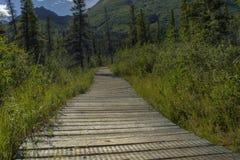 Träbana till och med skogen royaltyfri bild