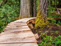 Träbana till och med skogen Arkivfoton