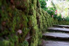 Träbana, väg, spår från plankor i Forest Park, perspektivbildbakgrund arkivfoton