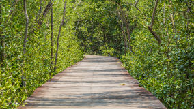 Träbanan går till den tropiska skogen Royaltyfri Foto
