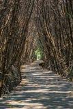 Träbanan går till den tropiska skogen Arkivbild