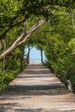 Träbanan går till den tropiska skogen Royaltyfri Bild
