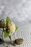 Träblomma och sten Arkivfoto