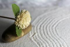 Träblomma och sten Arkivbild