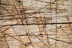 Träbräde med textur och modellen Arkivfoton