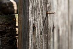 Träbrädet med ett rostigt spikar Royaltyfri Fotografi