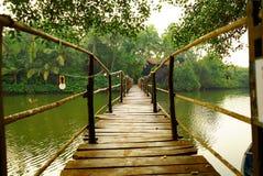 Träbro över floden i tropisk skog Arkivbild