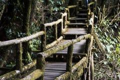 Träbro eller bana i skogen Arkivfoton