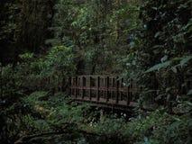 Träbro i djup skog royaltyfria foton