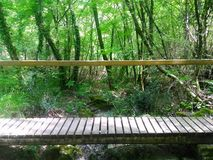 Träbro i natur Arkivfoton