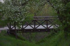 Träbro i naturen Arkivfoton