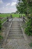 Träbro i risfältet. Royaltyfria Foton