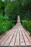 Träbro i skog Royaltyfria Foton