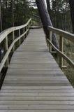 Träbro in i skogen Royaltyfri Foto