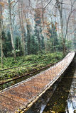 Träbro i skogen Royaltyfri Bild