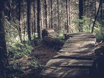 Träbro i staten Washingtonregnskog arkivbild
