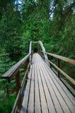 Träbro i tät skog över den Ahja floden royaltyfri fotografi