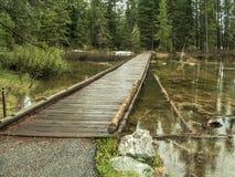 Träbro nära Jenny Lake i den storslagna Teton nationalparken arkivfoton