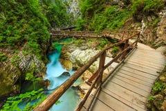 Träbro och Green River, Vintgar klyfta, Slovenien, Europa Fotografering för Bildbyråer