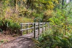 Träbro på att fotvandra slingan i tempererad regnskog in tidigt royaltyfria foton