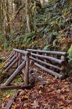 Träbro på naturslinga Royaltyfri Bild