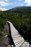 Träbro på slinga i Karkonosze berg Fotografering för Bildbyråer