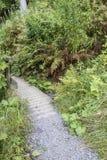 Träbro på vandringsledet Arkivfoton