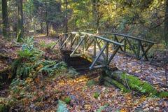 Träbro som F. KR. fotvandrar slingan frodiga Autumn Foliage Stanley Park Vancouver Kanada arkivbilder