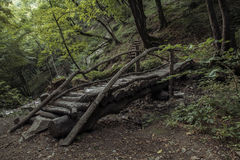 Träbro som omges av grönska Arkivfoto