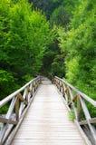 Träbro till naturen Arkivbild