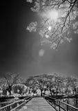 Träbro under träd och solljus Royaltyfri Bild