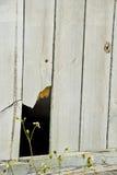 träbroken staket Royaltyfri Bild