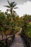 Träbron och moment som göras av bräden, går ner, och tropiska träd och kokosnöten gömma i handflatan Tulum Riviera Maya, Yucatan, Royaltyfri Fotografi