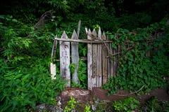 Träbrutet staket i växter royaltyfri fotografi