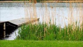 Träbrygga i sjön med gräs och vassen lager videofilmer