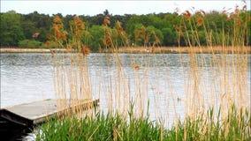 Träbrygga i sjön med vassen och gräs lager videofilmer