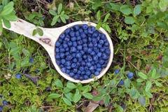 Träbunke av blåbär royaltyfri foto