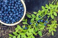 Träbunke av blåbär royaltyfria bilder