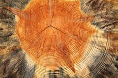 Träcirklar Fotografering för Bildbyråer