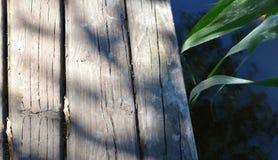 trädäck på naturbakgrund Royaltyfria Foton