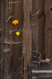 Trädörr för gammal ladugård Fotografering för Bildbyråer